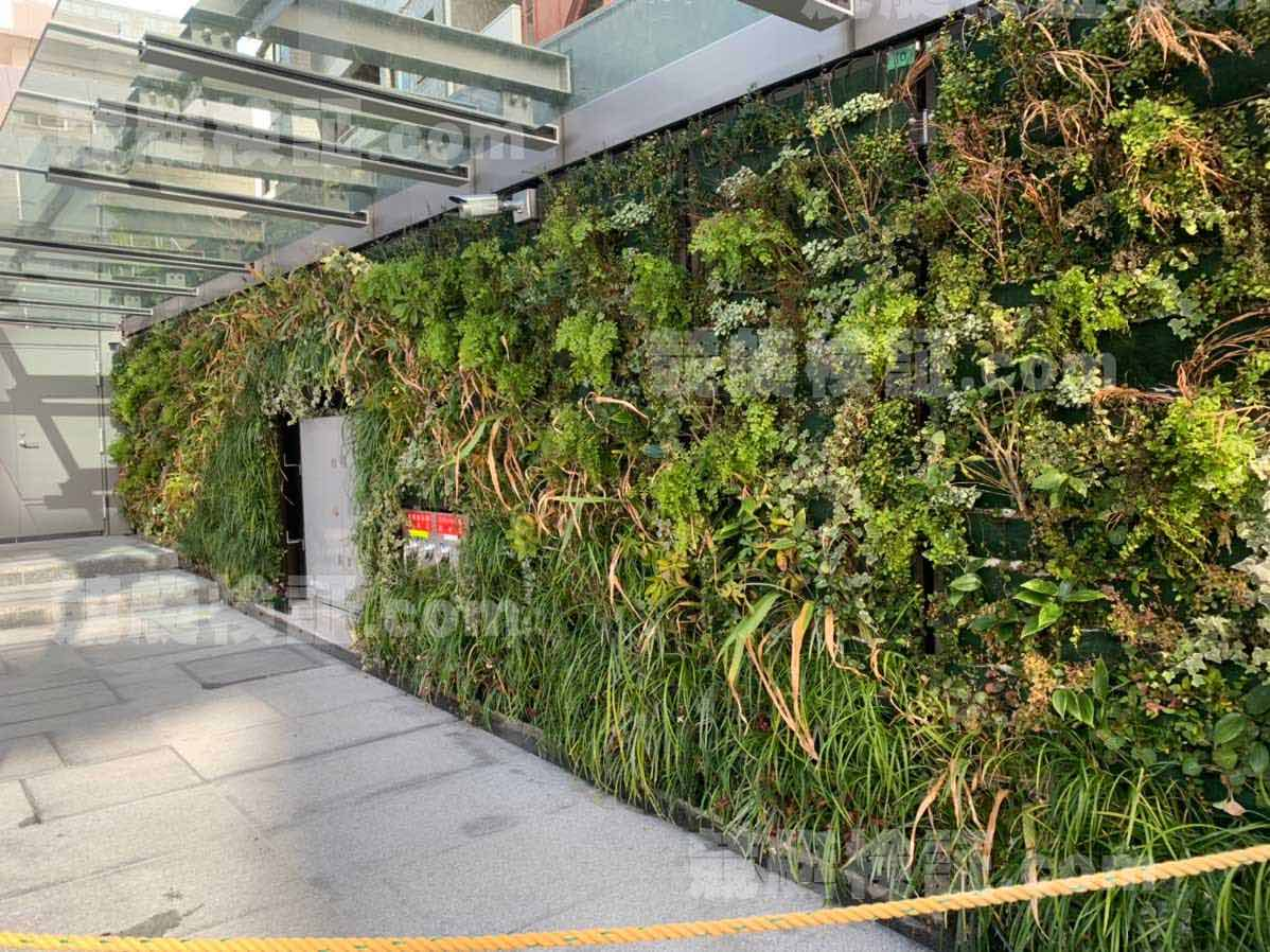 六本木ボート振興会本社ビルの壁一面に植えられた植物